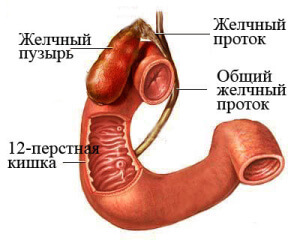 Дискинезия желчевыводящих путей (ДЖВП): симптомы, лечение