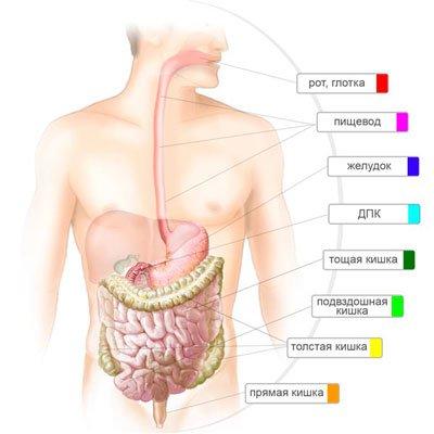 Болезни кишечника и анемия
