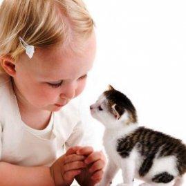 аллергия у кота лечение в домашних условиях